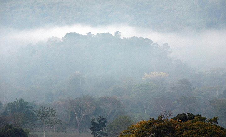 4rainforest DSC_0007