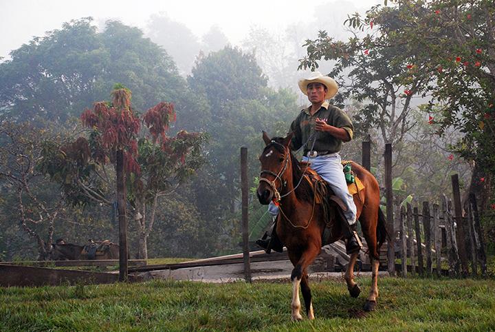 Zap horse_0084