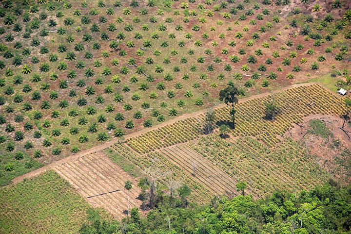 OP african palm oil DSC_0476